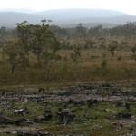 Environmental Issues in the Tarkine Region of Tasmania, Australia