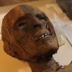 Egyptian Mummies in America Ponder a Return
