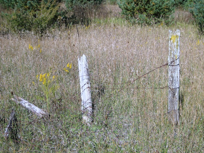 Broken barbed wire fence in a field of grass and wildflowers