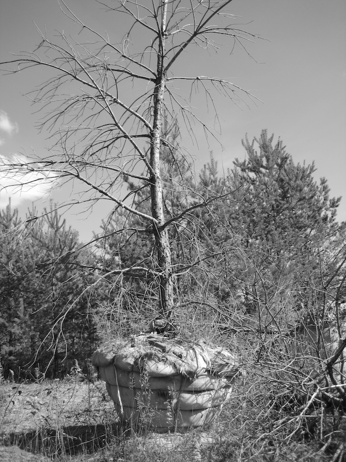 dead tree with its roots wrapped, abandoned on a tree farm (black and white)