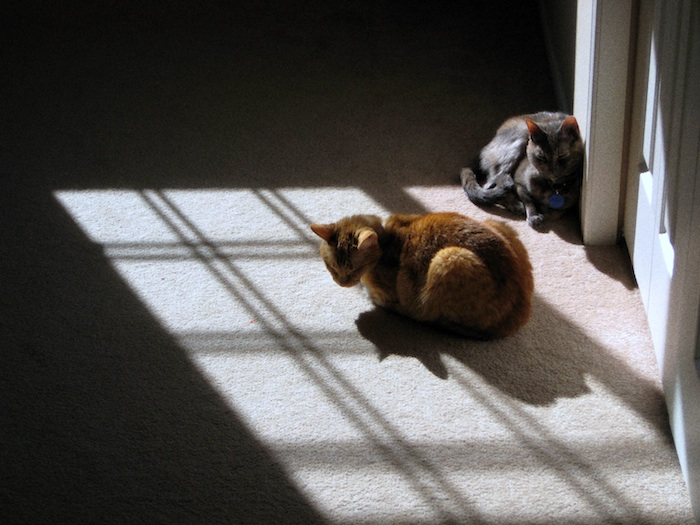 Orange and gray cat sitting in sun and shadows