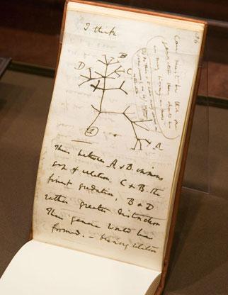 darwins notebook (artofmanliness.com)