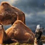 Ship of the Arctic: Extinct Camel Fossils Discovered in Northern Canada