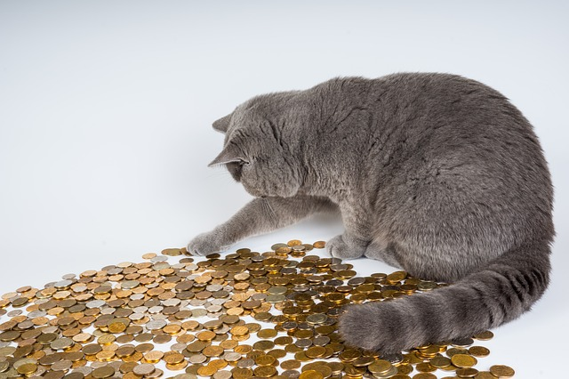 cat playing with a pile of money coins