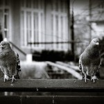 Pigeonhole Paradox Shows How the Future Can Affect the Present