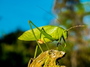 Close-up of a grasshopper sitting on a branch | insects